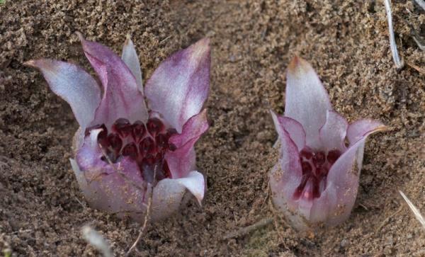 Фотофакт: Вымирающие растения