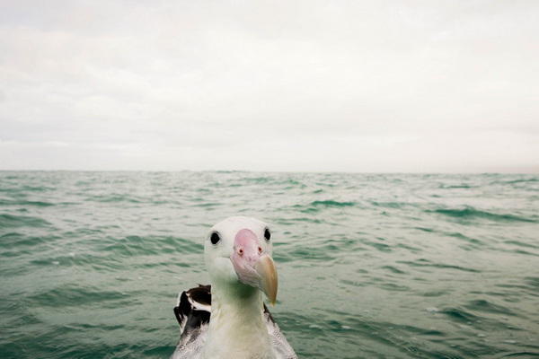 Фотофакт: Смешные фотографии дикой природы