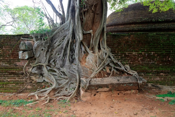 Фотофакт: Необычные фото, показывающие силу корней деревьев