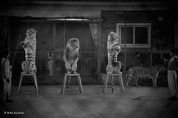 """Фотофакт: Победители конкурса """"Фотограф дикой природы - 2015"""""""