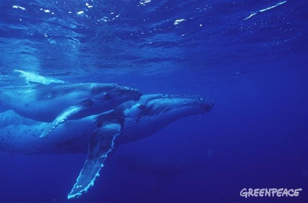 Фотофакт: Пять удивительных фактов о китах