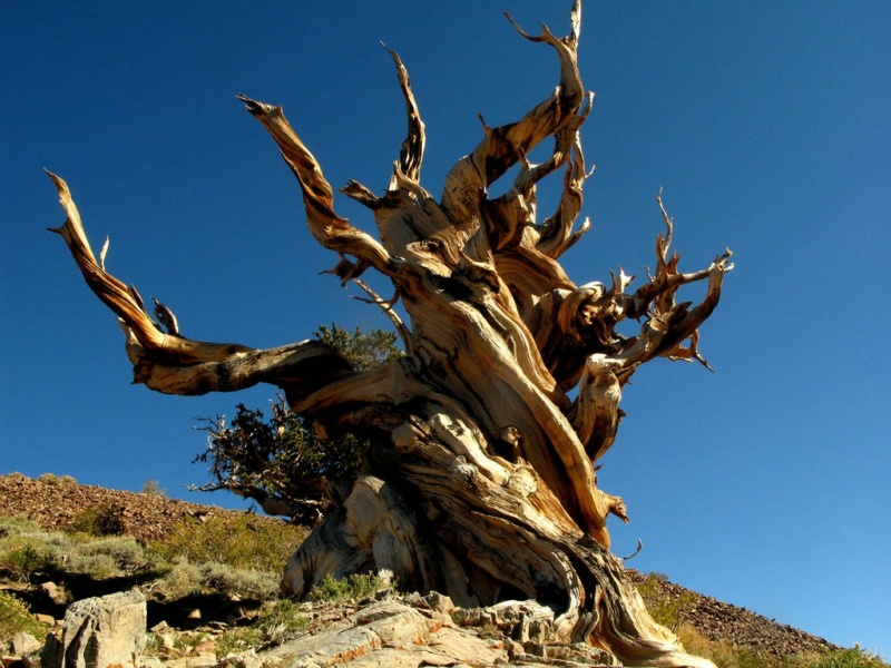 Фотофакт: Десять удивительных организмов, которые живут невероятно долго