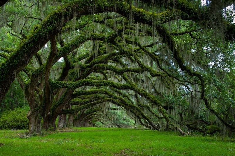 Фотофакт: Самые великолепные деревья в этом мире