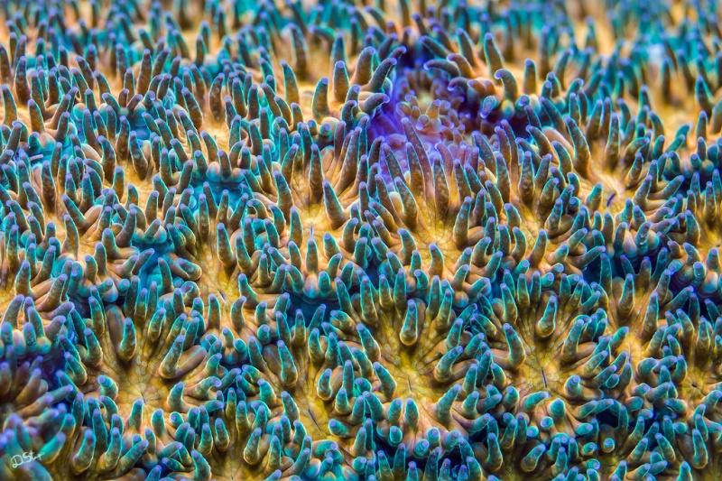 Фотофакт: Колоритные кораллы
