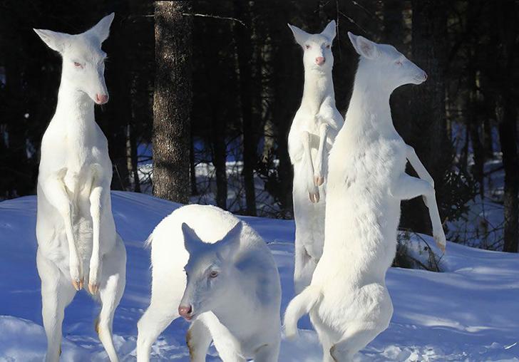 Фотофакт: Капризы природы - животные-альбиносы
