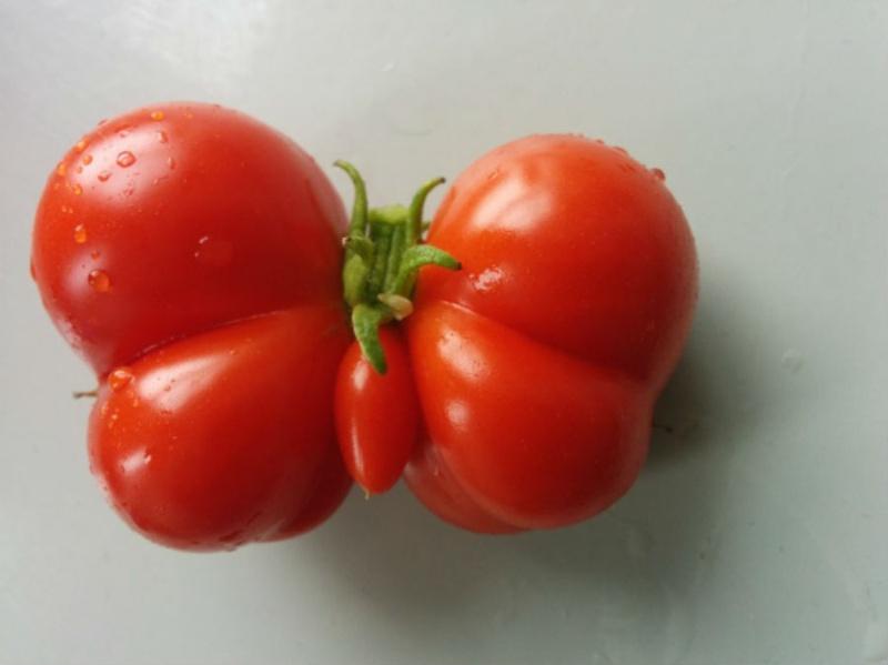 Фотофакт: Самые неожиданные формы овощей и фруктов