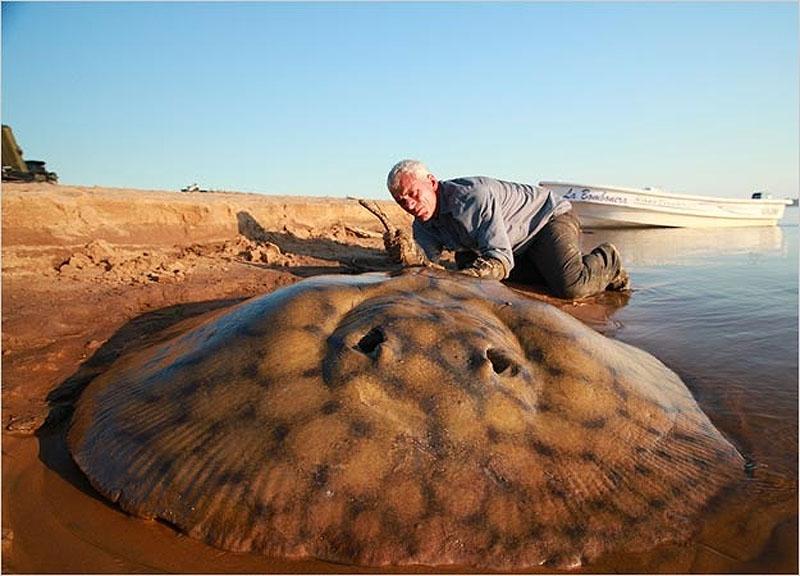 Фотофакт: 20 самых удивительных речных монстров
